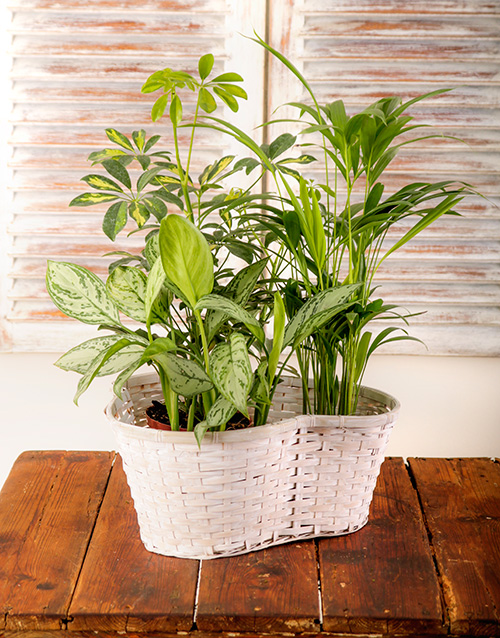 Office Pot Plants from Netflorist | HarassedMom