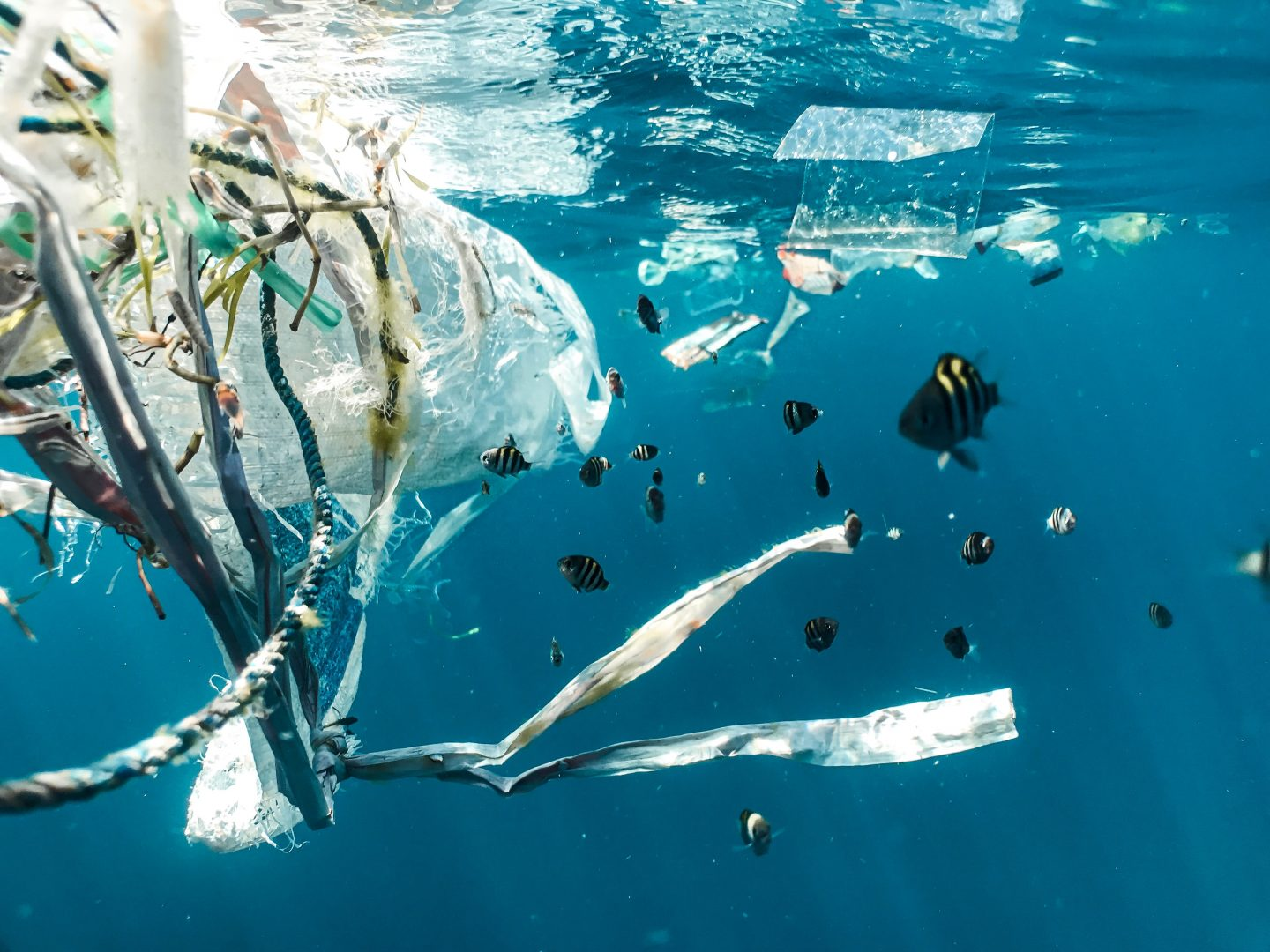 10 Facts About Single-Use Plastic Bags